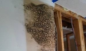Water Damage Restoration Causing Mold Growth